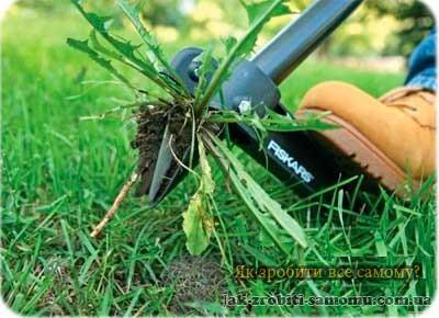 Як зробити газон своїми руками