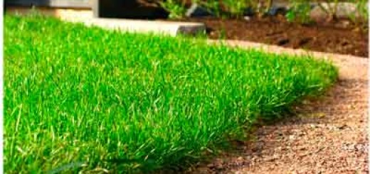 Як зробити газон?