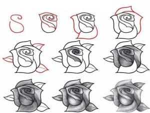 Як намалювати троянду олівцем поетапно