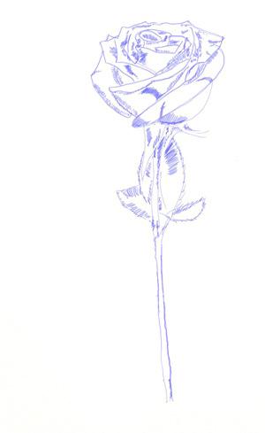 Як намалювати троянду поетапно