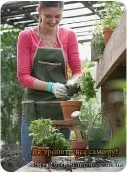 Як пересадити вазони?