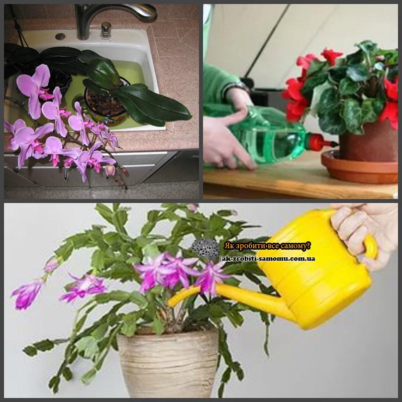 Догляд за домашніми рослинами.