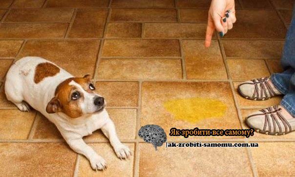 Как приучить щенка к лотку или пеленке4