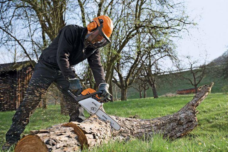 Як видалити дерево на ділянці